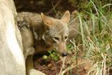 RedWolves-0005-after.jpg