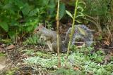 Zoo Squirrel 3