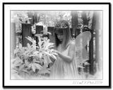 Curious Fairy.jpg