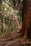 Jungle Web