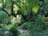 San Francisco Arboretum