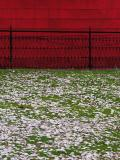 Seasons on a Lawn