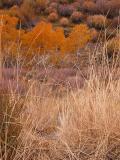 Layered Autumn