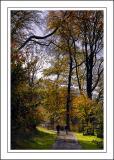 Longleat ~ another woodland walk