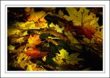 Stourhead ~ on the forest floor