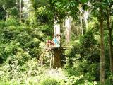 Feeding platform in the forest