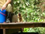 Little monkey has made it onto the platform