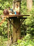 Monkeys try to sneak up below the platform