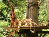 Monkeys take over the platform