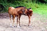 Foals in love