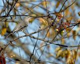 Garden City Bird Sanctuary