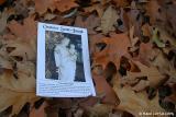 Feuilles d'automne / Autumn Leaves