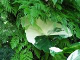 Hawaii: Green