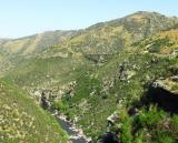 The bridges of Teieri Gorge