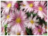 impressionism-flowers3.jpg