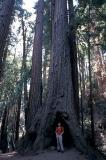 Big tree, little me