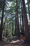 Conifers galore