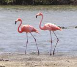 Bonaire 2003 - a snorkeler and birder's paradise!
