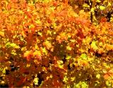 Fall color