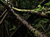 fallentree002.jpg