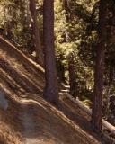 Jackson Lake Trail