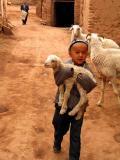 Boy and lamb