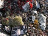 Roserock with Lichen