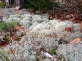Catamount Lichens 0823 copy.jpg