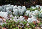 Catamount Lichens 0824.jpg