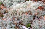 Catamount Lichens_2 0823.jpg