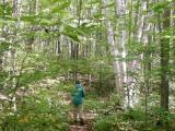 Catamount Trail 0828.jpg