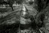 ... on the tracks