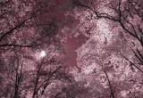 trees sun