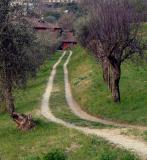 Bellagio Italy - Photographs
