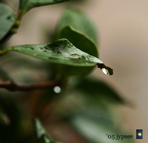refracted raindrop