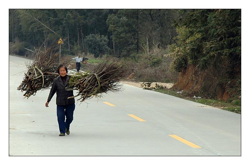 brushwood transport