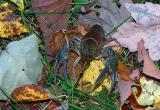 crayfish-8580.jpg