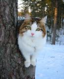 martta_tree_face.jpg