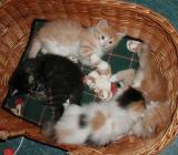 having fun in the basket.