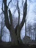 Cmentarz wojenny nr 3 w Ożennej(147-4713_IMG.JPG)