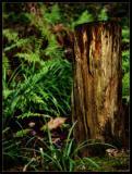 DSCF0017woods-web.jpg
