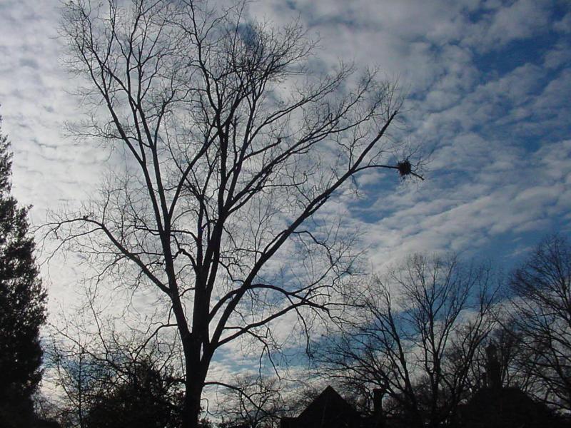 DC.Williamsburg. birdnest.jpg
