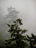 Eagles in the fog.jpg