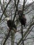 Eagle 2xDigital.jpg