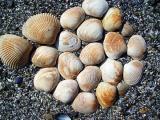 glacier bay shell arrangement