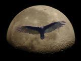 Vulture Moon