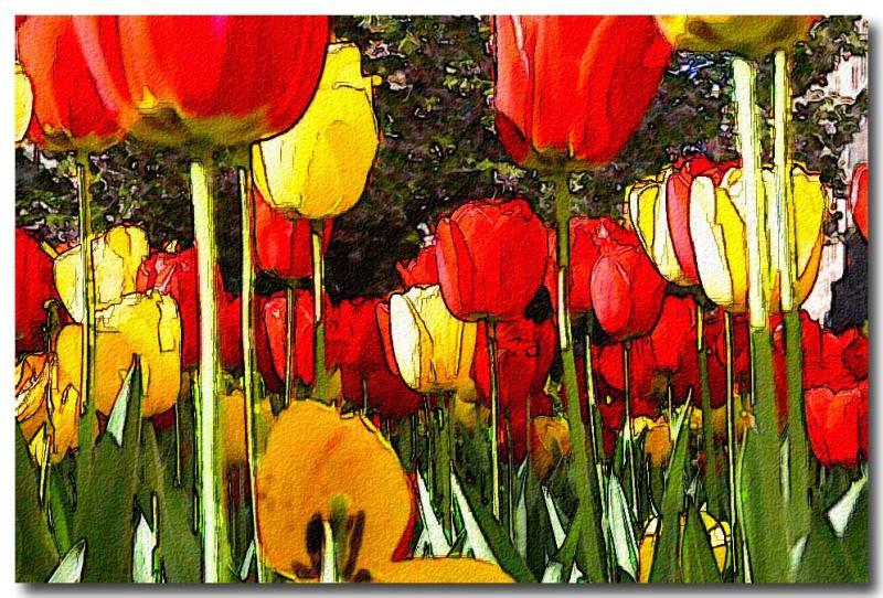 Tulip Closeup.jpg