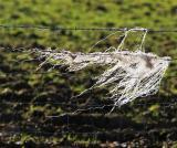 Netting on fence