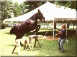 mules are great at jumping from a standstill and landing standing still!