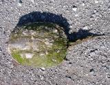 snapping turtle - 6